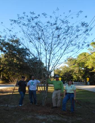 Figure 5: Arbor Day Tree Pruning along Main Street
