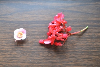 Flower on left is male; on right is female