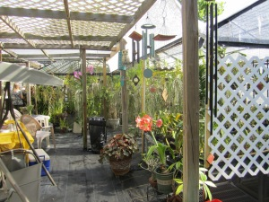 Margie F.'s Backyard Orchid greenhouse