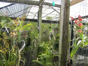 Another view of Margie F.'s backyard orchid greenhouse
