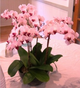 Beautiful orchid(s) decorating our beverage table.