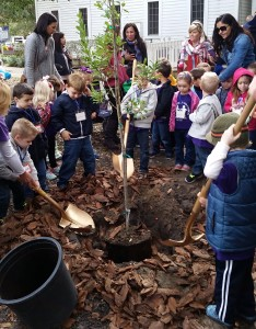 A few of the Windermere Union Preschool students helping to plant a tree.