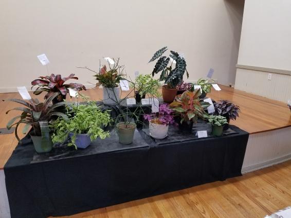 2018 Flower Show Photo #20