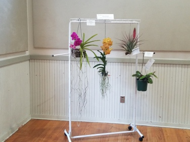 2018 Flower Show Photo #16