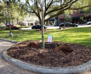 2020 Arbor Day Photo # 2
